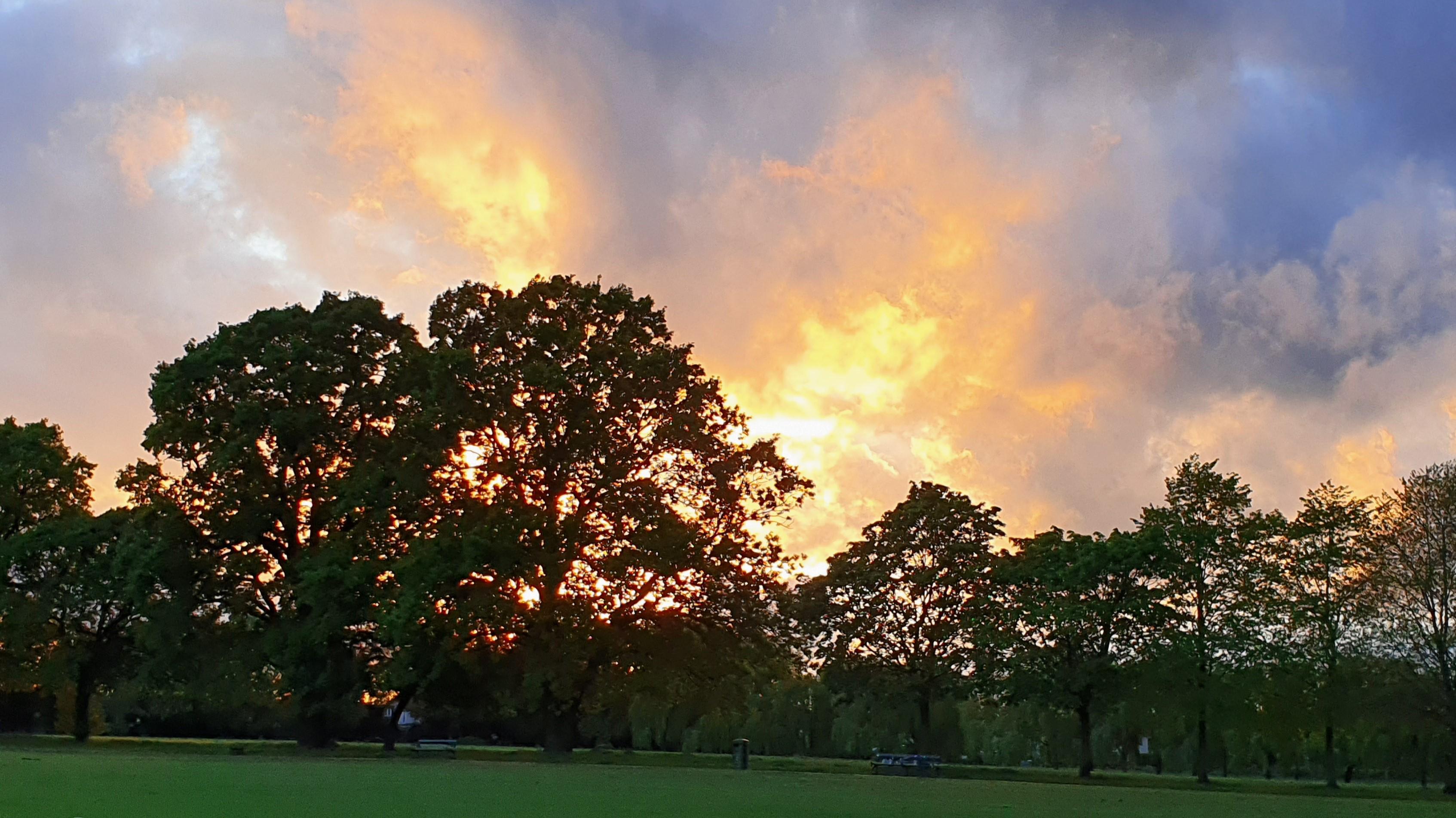 sunset in harold wood park