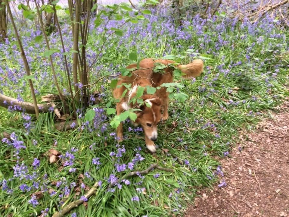 bentley over belhurst wood