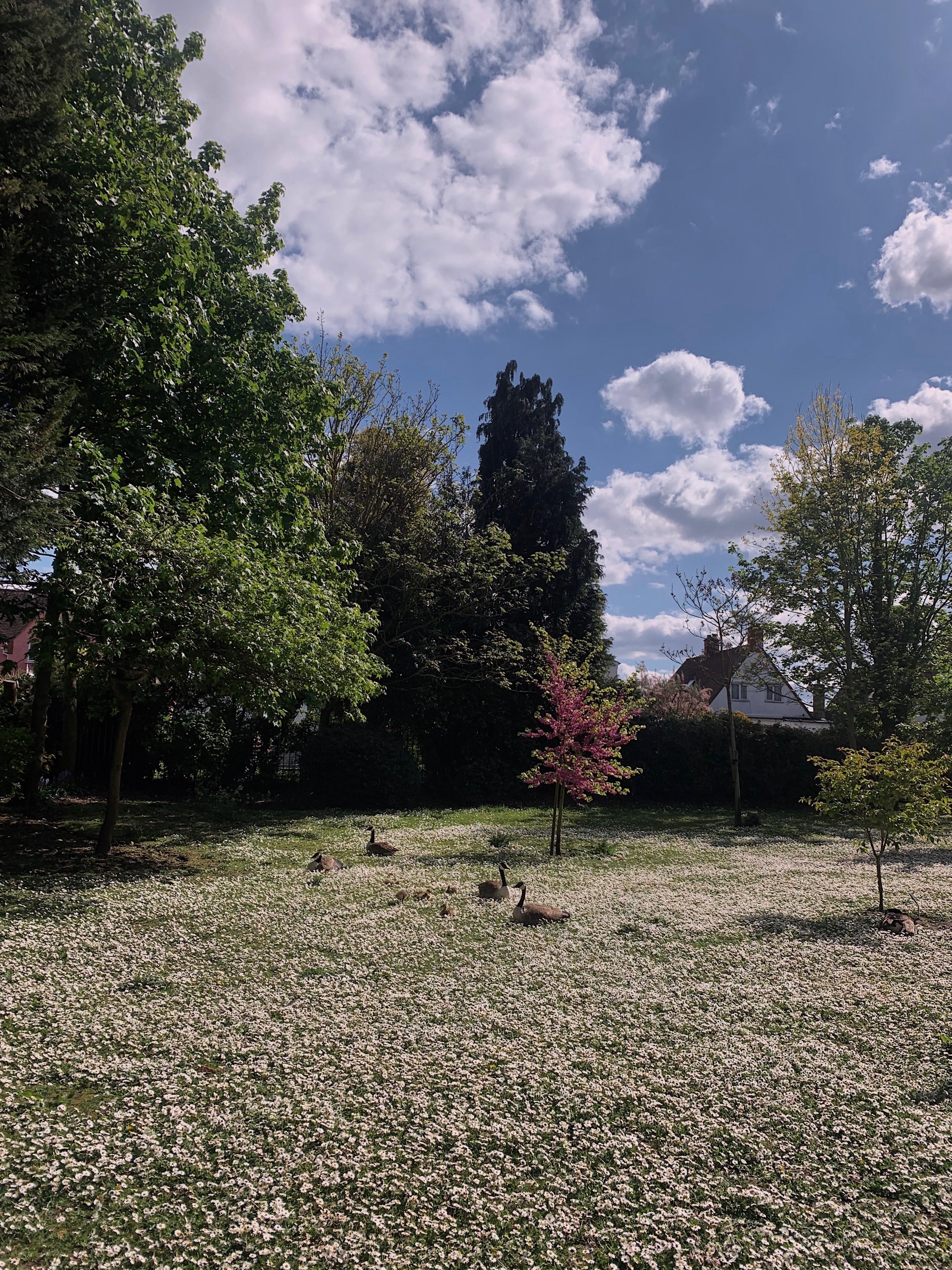 clockhouse gardens