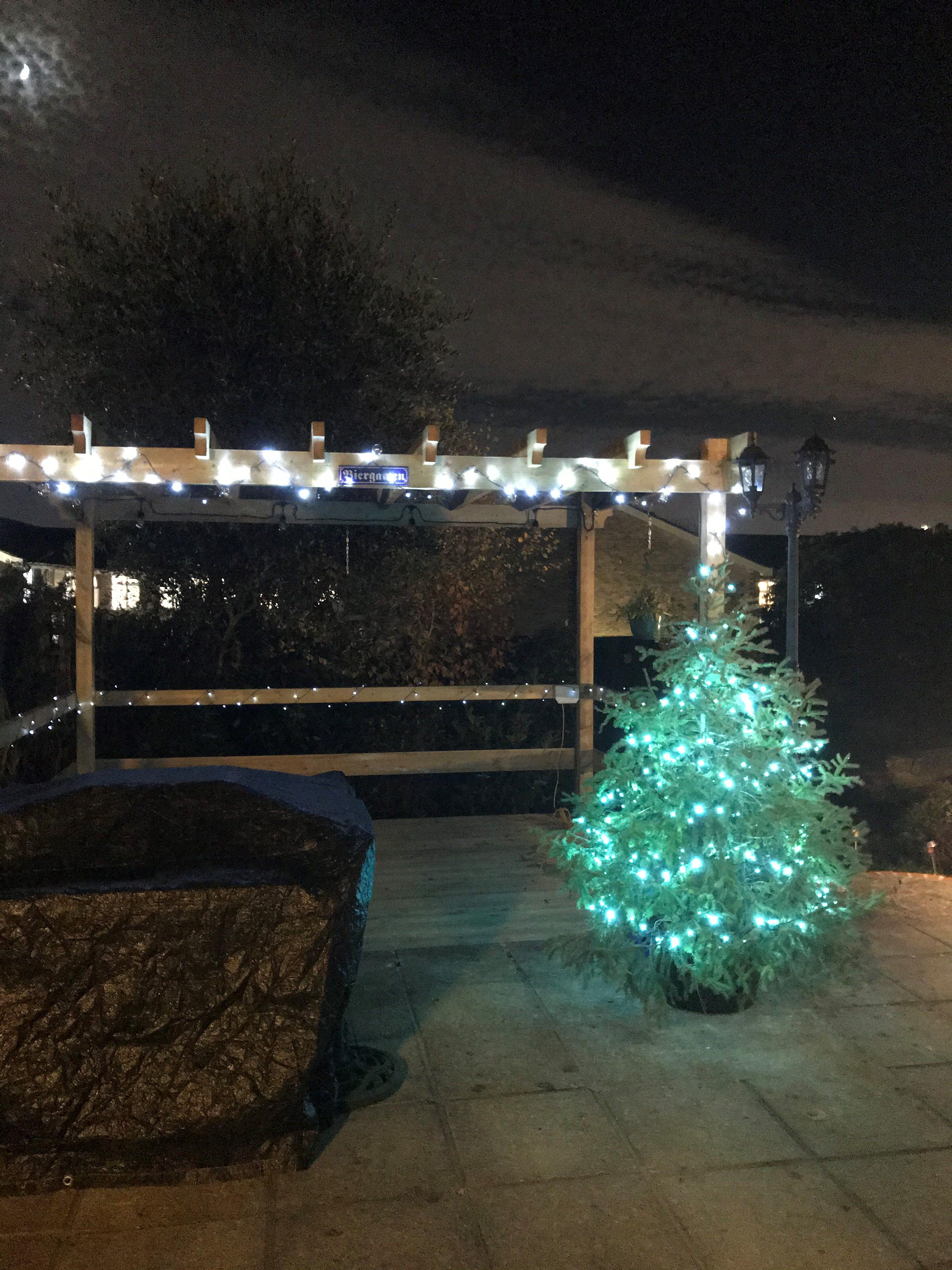 my outdoor christmas tree