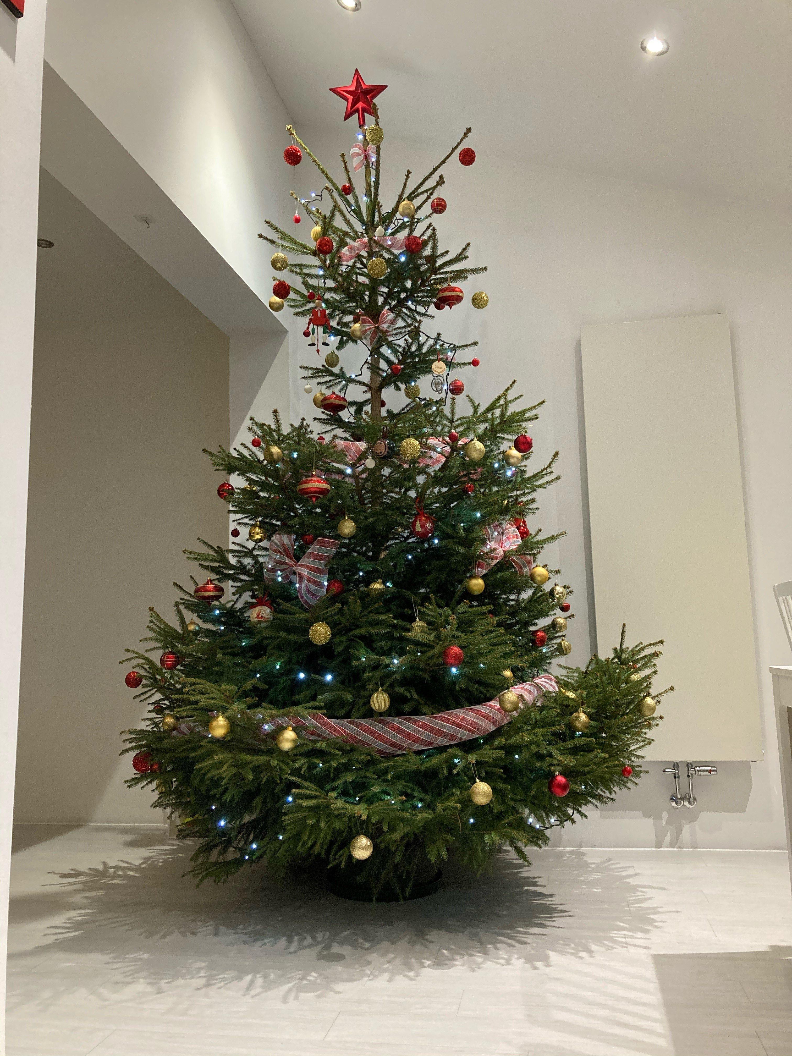 jesus our christmas tree